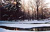 Sun Peering Through Ice and Snow Covered Trees Picture Thumbnail