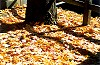 East Park�s Ground Covered in Autumn Gold Picture Thumbnail