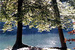 Eastern Hemlock Trees at Kooser State Park Picture Thumbnail