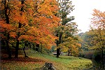 A Drizzly Autumn Day Near Ancient Hemlocks Picture Thumbnail