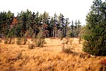 Autumn Colors at the Spruce Flats Bog Picture Thumbnail