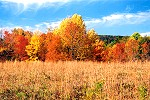 Quebec Run Wild Area�s Autumn Colored Forest Edge Picture Thumbnail