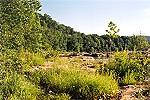 Summer Morning Greenery Along the Youghiogheny Picture Thumbnail