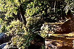Morning Sunlight on the Rocky Forest Floor Picture Thumbnail