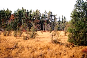 Autumn Colors at the Spruce Flats Bog