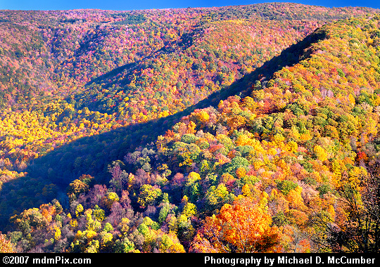 Laurel Ridge Blistered with Fall Foliage Color Picture