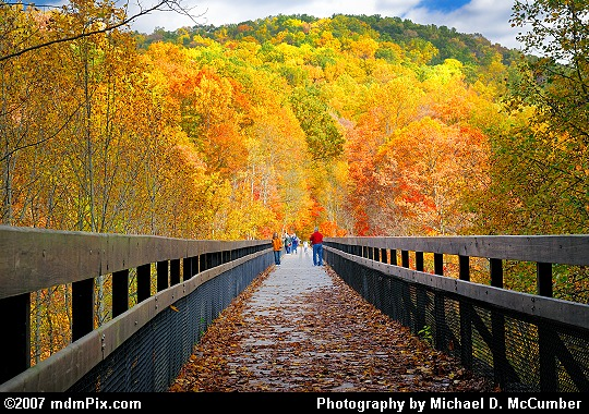 Trees of Yellow Surround an Ohiopyle Trail Bridge Picture