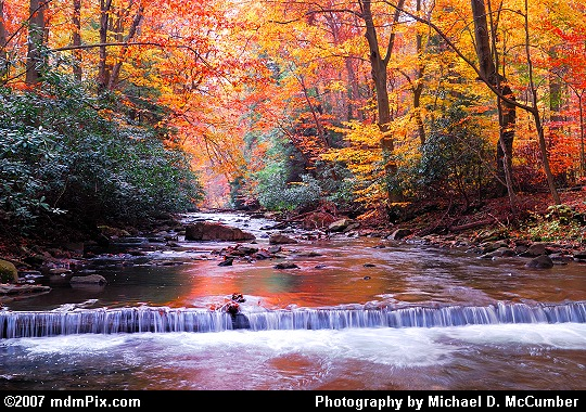 Fall Foliage Arches Over Scenic Dunbar Creek Picture