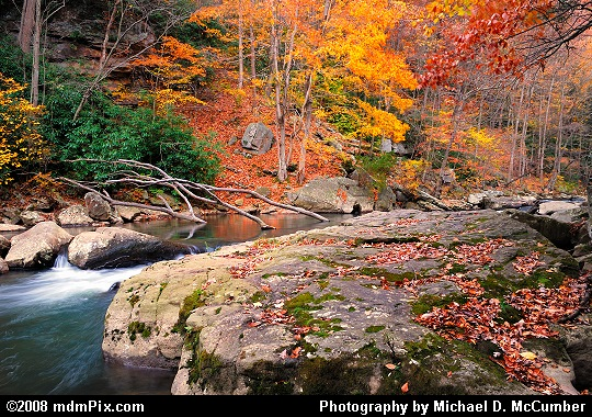 Large Rock, Meadow Run Rapid, and Fall Foliage Carpet Picture