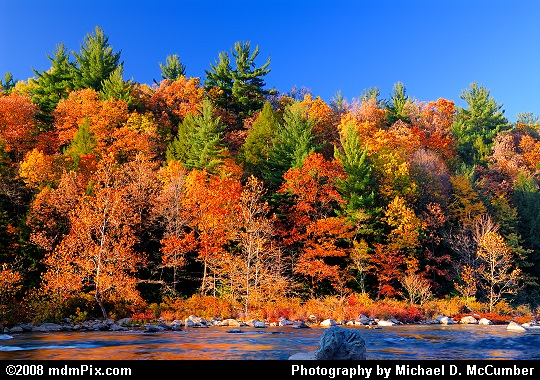 Ferncliff Peninsula with its Hemlocks, Pine, and Fall Foliage Picture