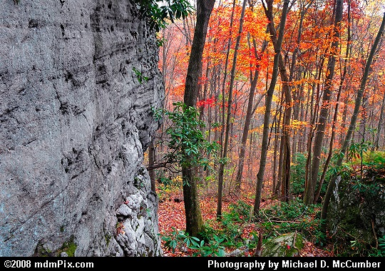 A Cliffside of Blue Limestone along Meadow Run Trail Picture
