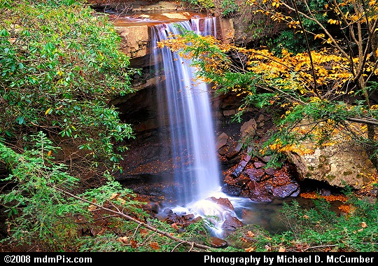 Cucumber Falls with Mountain Laurel, Hemlock, and Fall Foliage Picture