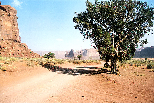 Sagebrush Trees Along the Dusty Desert Road Picture