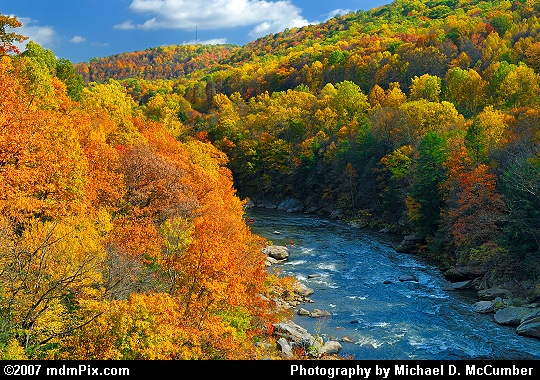 Youghiogheny River Surrounded by Autumn Foliage Picture