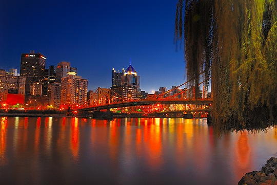 Willow Tree Along the Allegheny River in Pittsburgh Picture