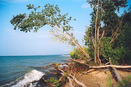 Lake Erie Meets Vegetation Along Presque Isle Picture