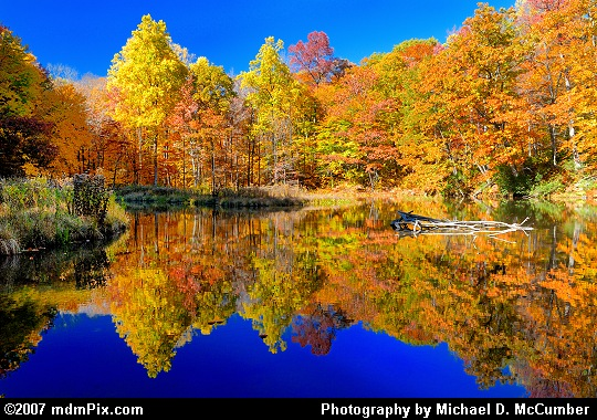 Reflections of Autumn Color on Jones Mill Run Pond Picture