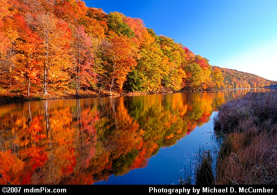 Laurel Hill Lake's Evening Reflection of Autumn Foliage Picture