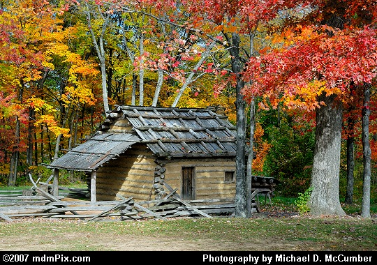 The Red Leaves of an Oak Tree above a 1700s Pioneer Cabin Picture